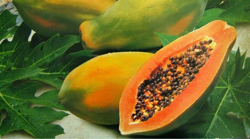 Growing & Caring for Papaya Trees   Tropical Florida Gardens