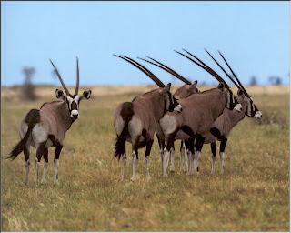 imagen de animales africanos