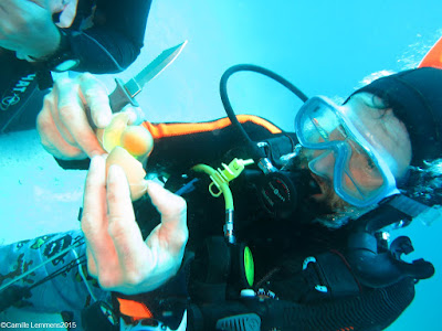 PADI Specialty Instructor training in Khao Lak