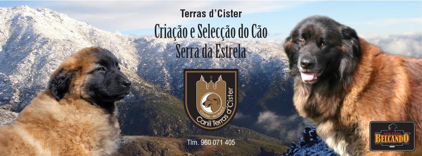 Terras d'Cister
