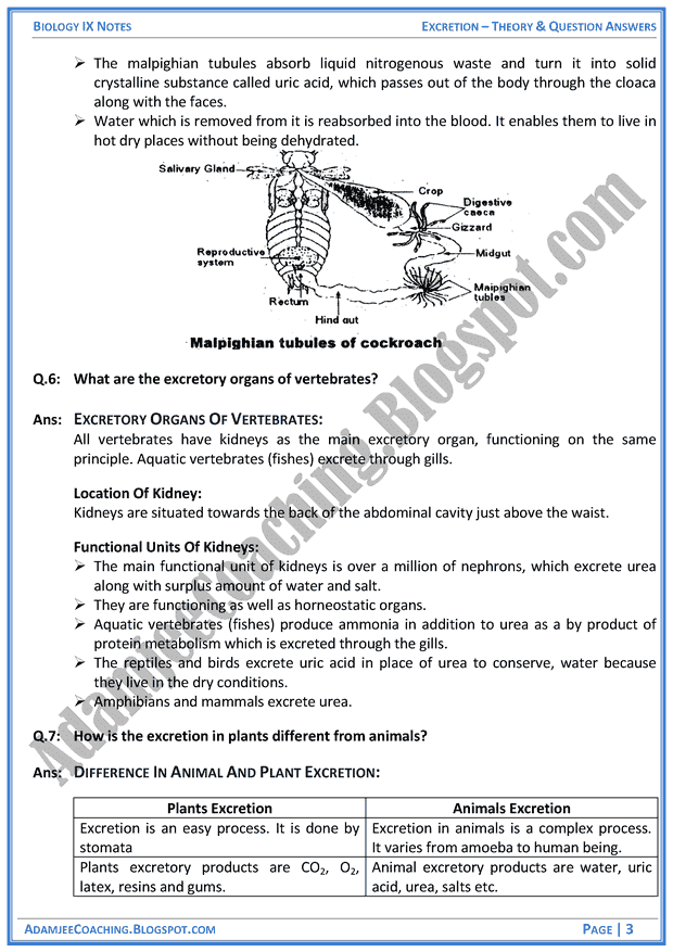 excretion notes No notes for slide chapter 3 excretion 1 chapter 3 excretion 2 human excretion• excretion: process of removing substances that are of no use or in.