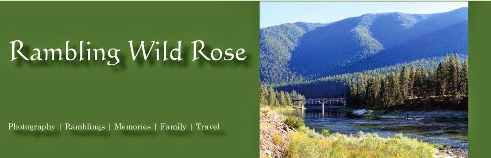 Rambling Wild Rose