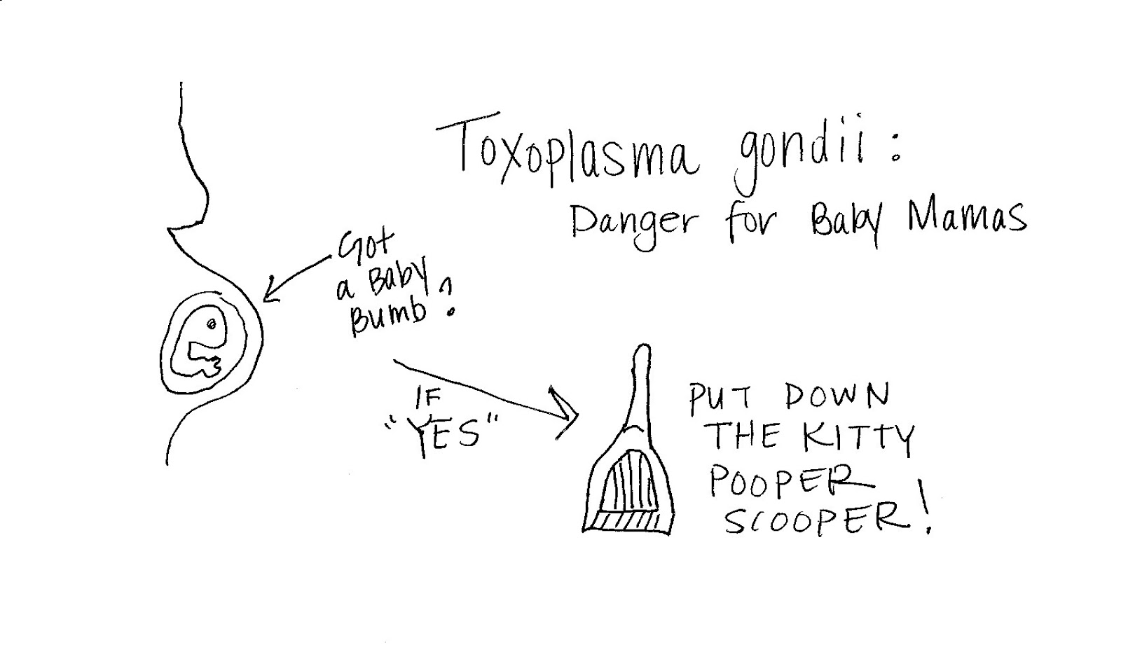 Toxoplasmosis in pregnant women