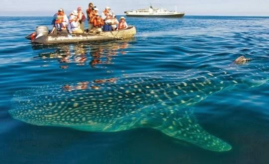 Cabinas De Baño Ambato:Los 10 Mejores Cruceros de las Islas Galápagos