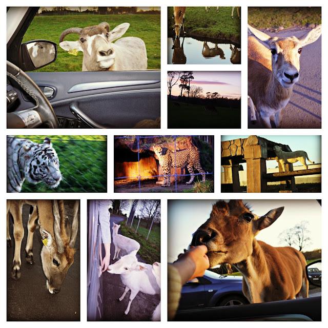 West Midlands Safari Park, wild animals
