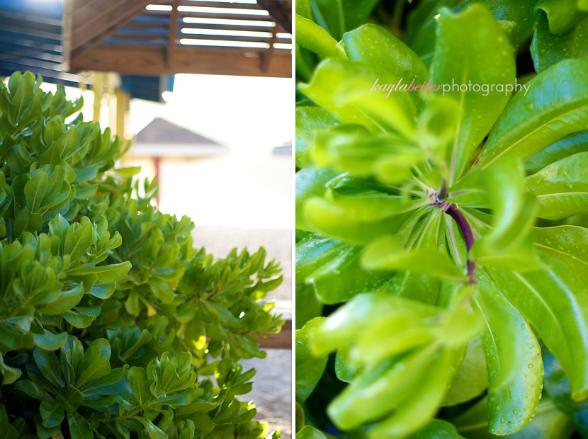 plants in the bvi photo