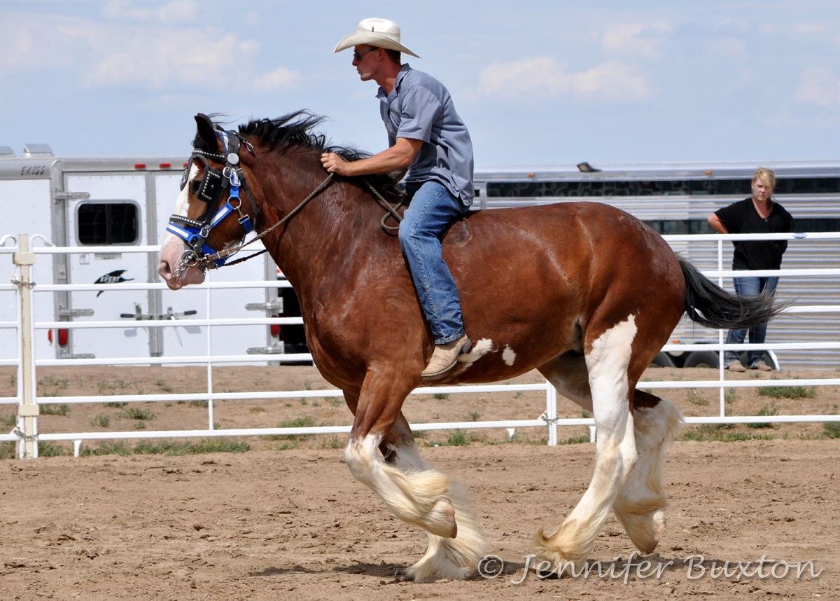 Braymere Custom Saddlery: Draft horse barrel racing, part two