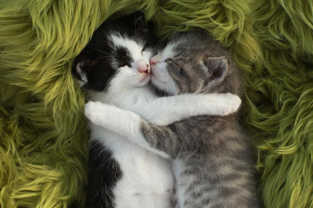 Cute little cats cuddling image