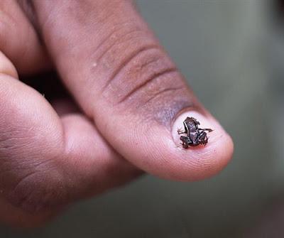أصغر الحيوانات في العالم 12.jpg