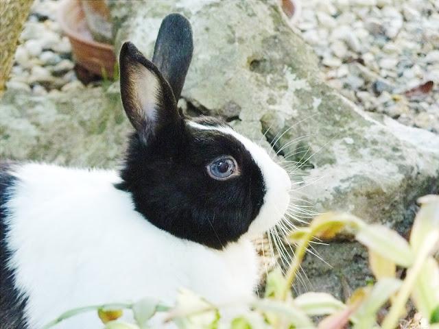Avantage d'avoir un lapin