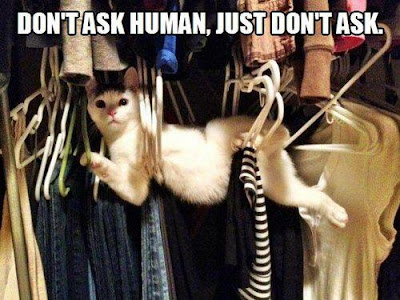 Cat stuck in closet hangers. Don't ask human, just don't ask.