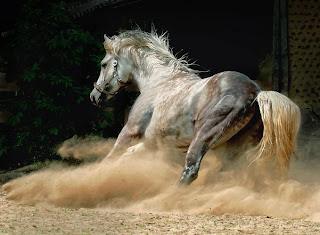 caballos pura sangre