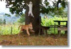 videos com animais