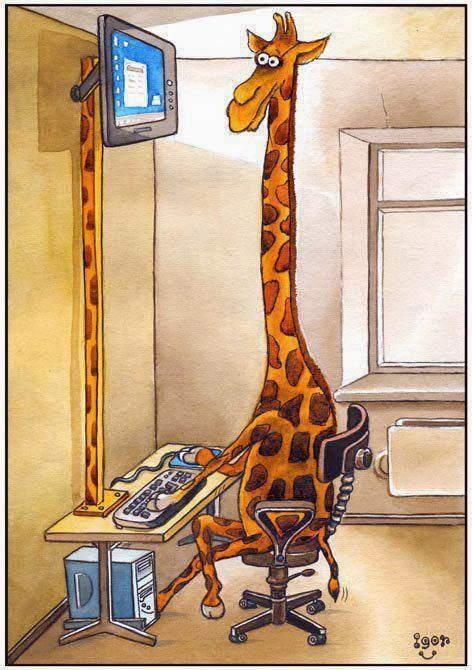Profil de girafa si de FB