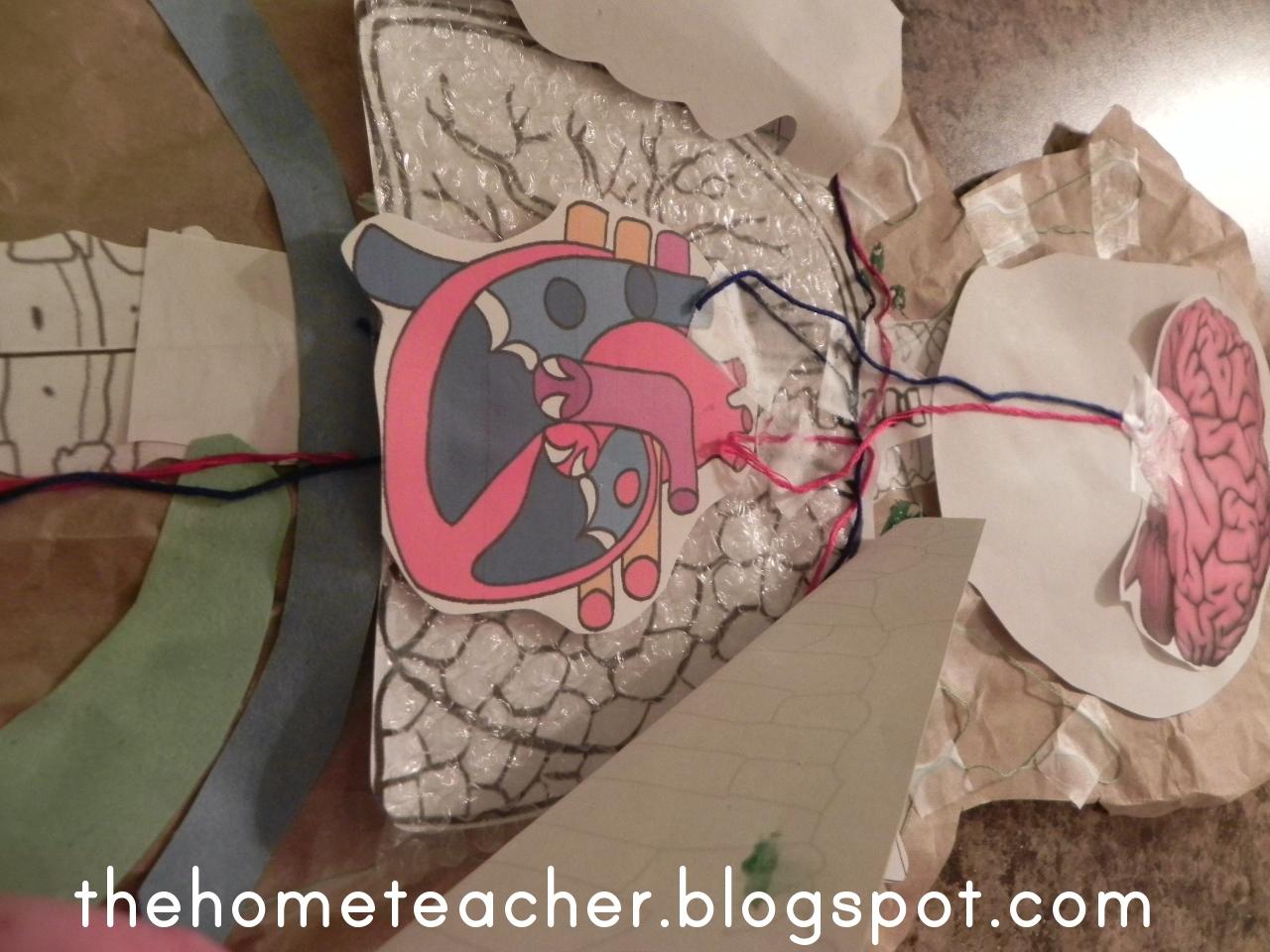 circulatory system project