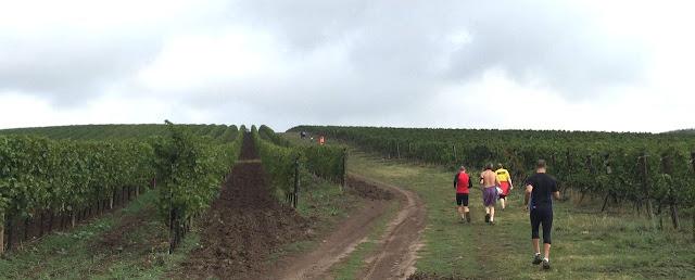 La Petrovaselo în Vie, invie alergarea prin natură. Trail Run Petrovaselo. 24 octombrie 2015. Florin Chindea Maseur Oficial al evenimentului. Traseu