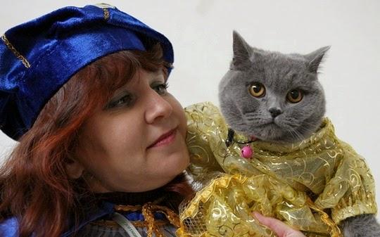 funny chartreux cat