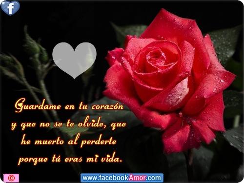 postales de rosas de amor