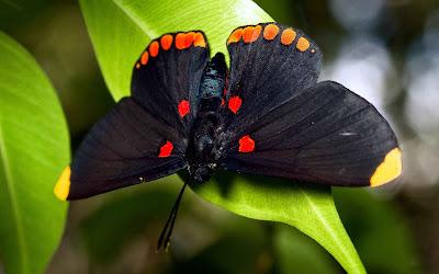 hình ảnh đẹp của bướm, những cánh bướm xinh, ảnh đẹp động vật, hình ảnh bướm đẹp,.