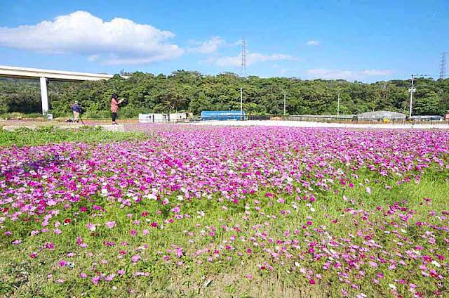 blue sky, HWY overpass, fields, flowers, photographers