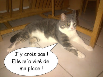 Chat sous la table.