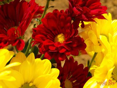 Flori rosii si galbene