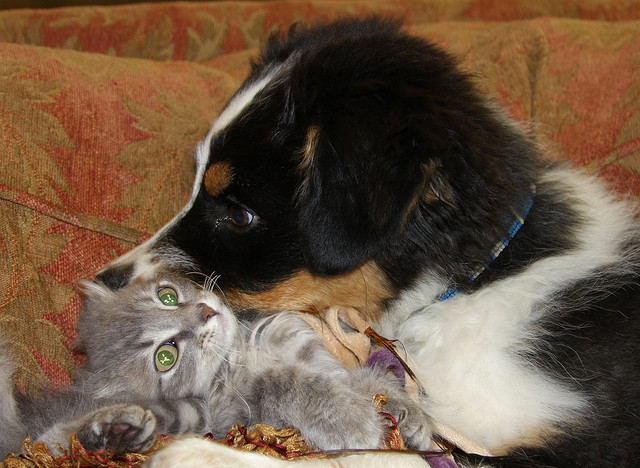 pictures of cute puppies and kittens