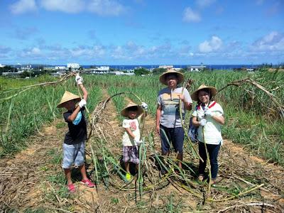 沖縄家族旅行 体験/観光 恩納村 サトウキビ刈り 黒糖 収穫