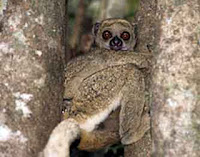 7 Hewan Spesies Baru Yang Diberi Nama Orang Terkenal [ www.BlogApaAja.com ]