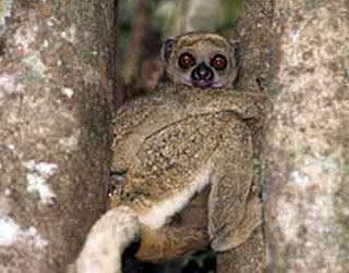 angkatigabelas : 8 Spesies Baru Memakai Nama Seleb