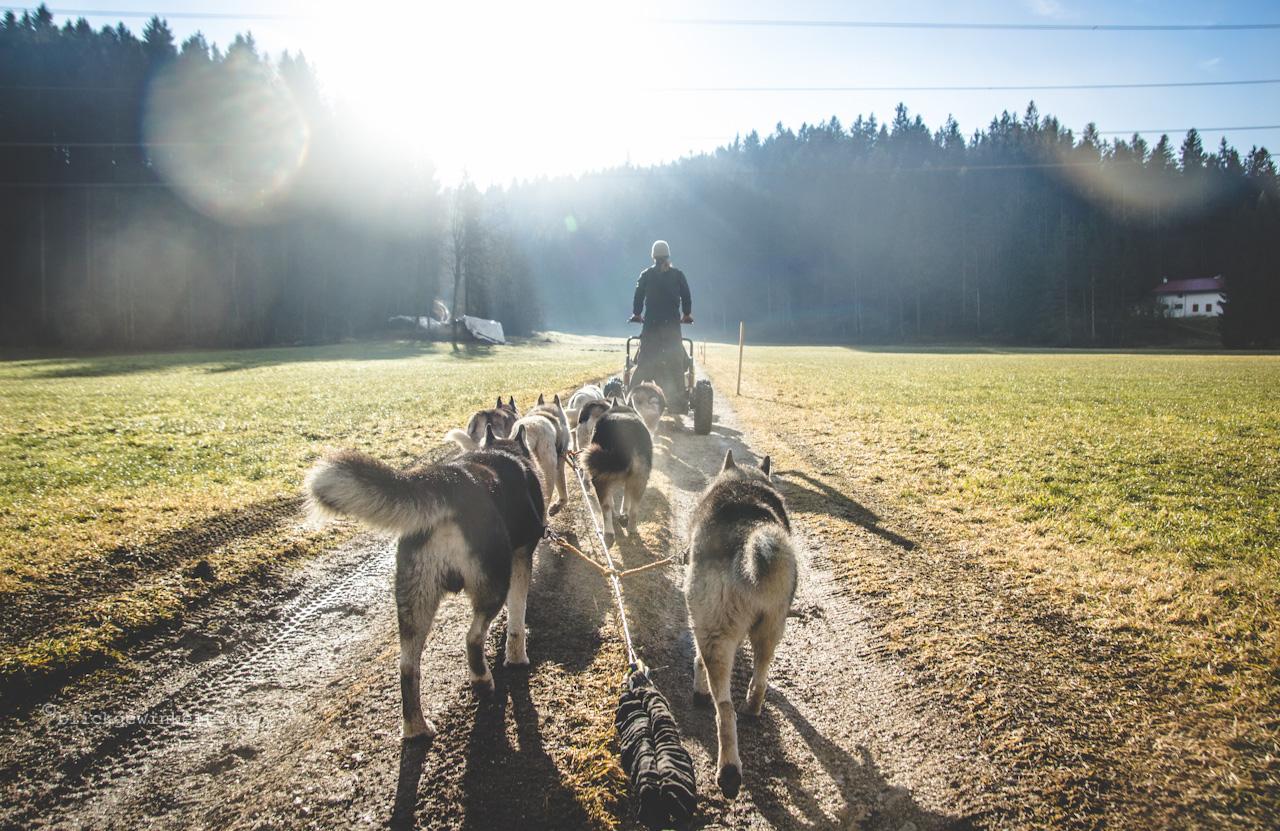 Hundeschlittenfahrt mit dem Sommercard