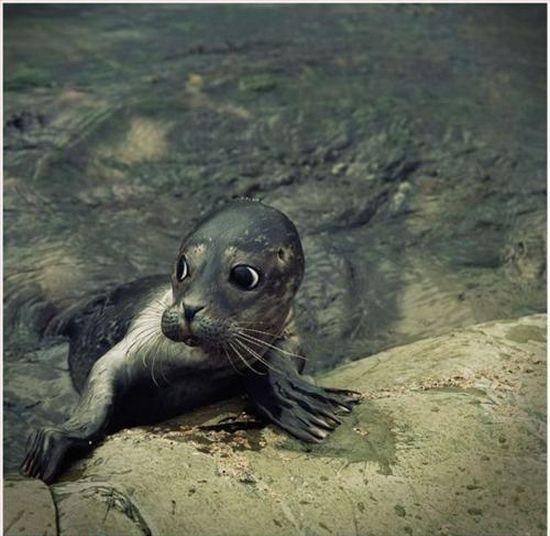 Cute wild baby animals - photo#12