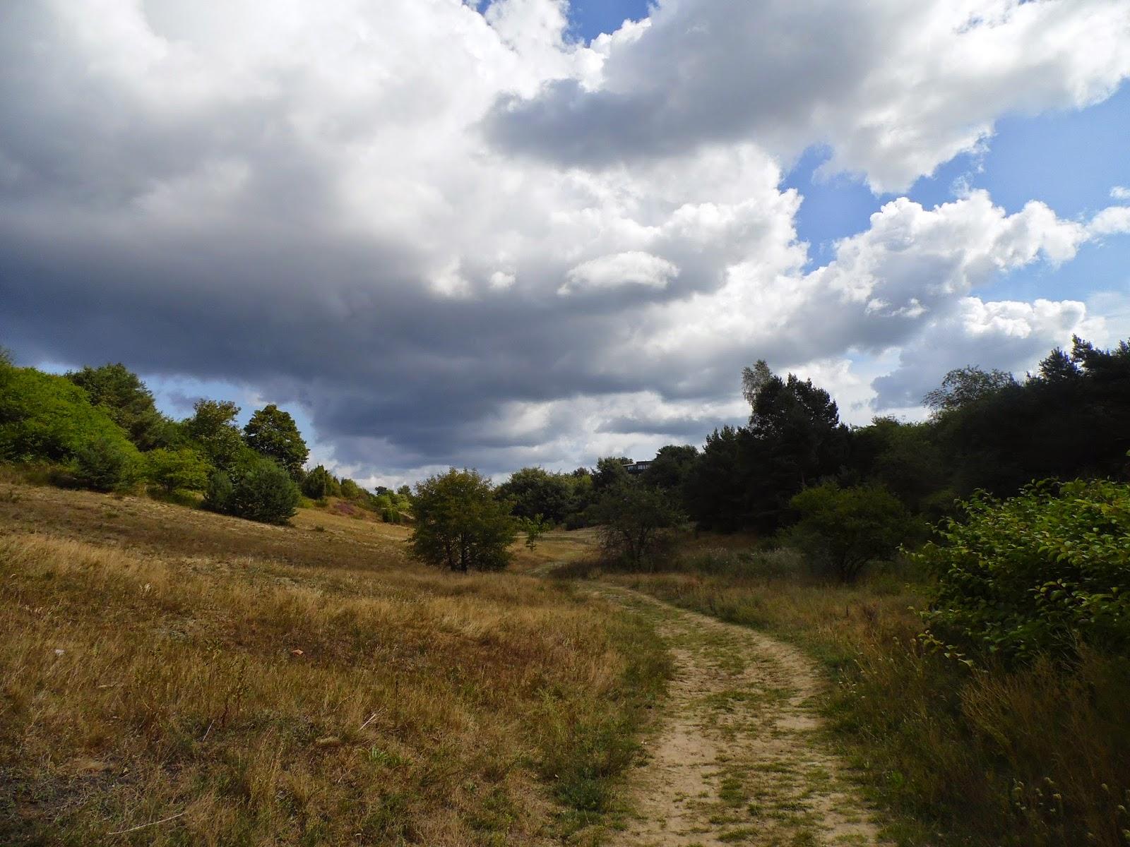 Widok ze Strondowego Jaru w Jastrzębiej Górze w kierunku Drogi Rybackiej