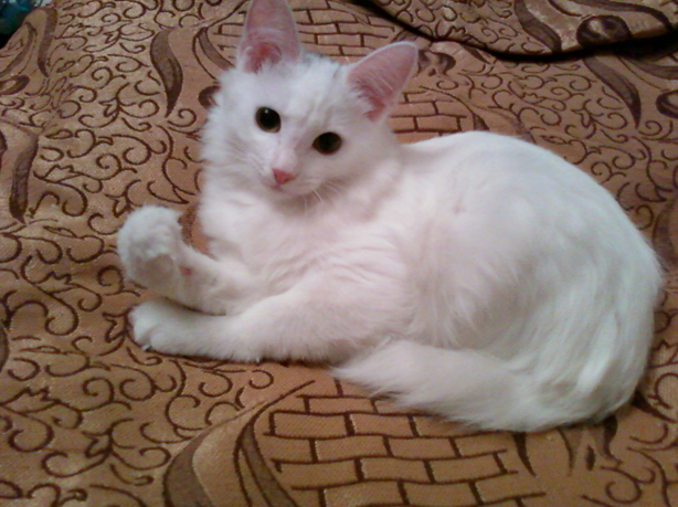 Кошка лежащая на диване