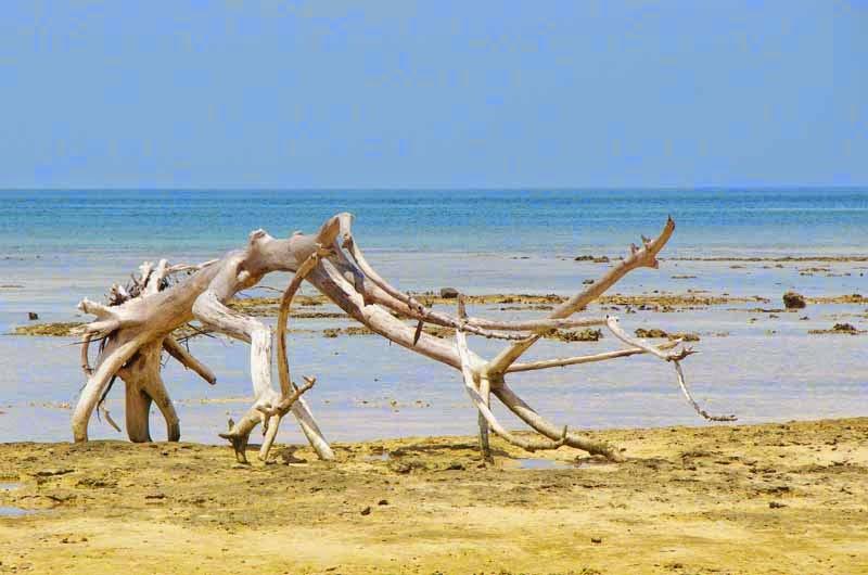 beach, island,dead tree Izena