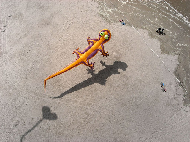 Kite Aerial Photography at Berck Kite Festival