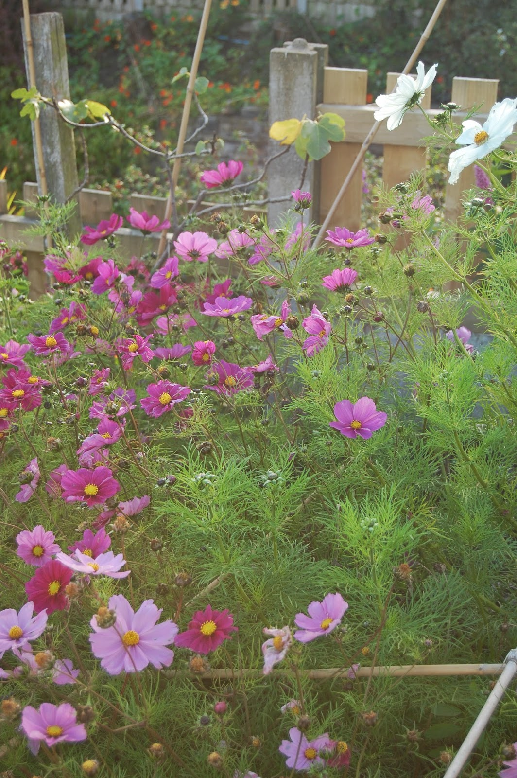 Annuals can be used to bring a garden into use.