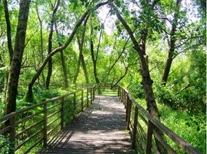 Wisata Taman Mangrove Daerah Kapuk Jakarta Utara