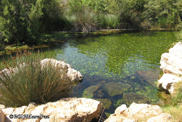 An Algarve stream
