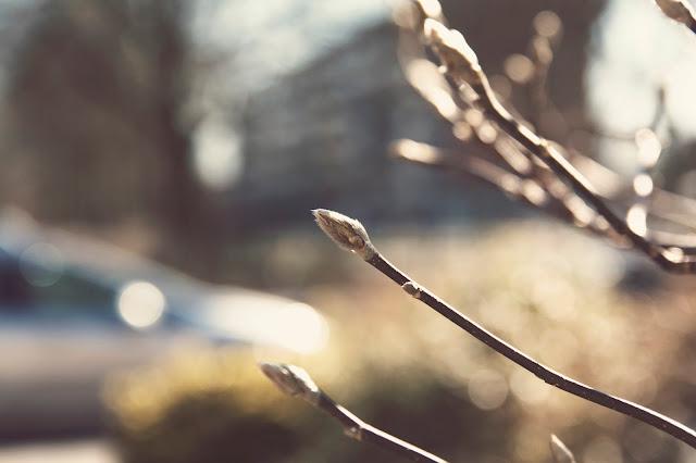 Beautiful Sunshine