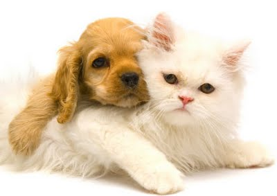 Tips to Take Care of Your Pets, Care of Your Pets, cat, dog, pet, pets,