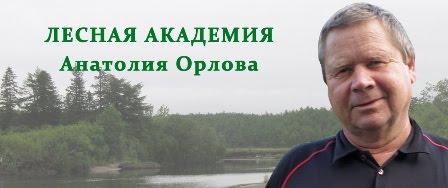 ЛЕСНАЯ АКАДЕМИЯ АНАТОЛИЯ ОРЛОВА
