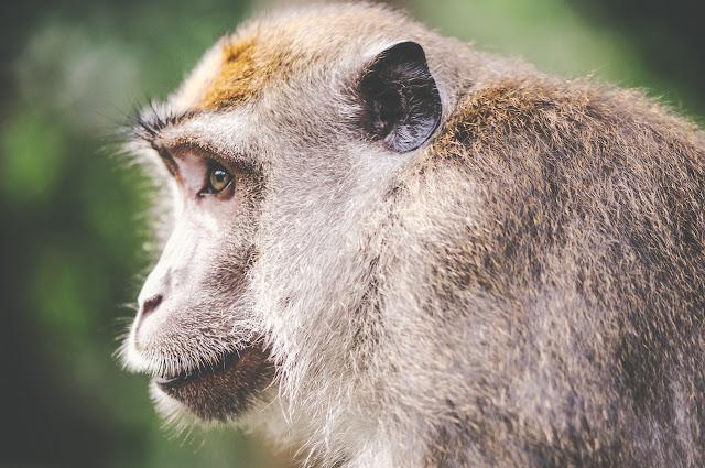 monkey social media
