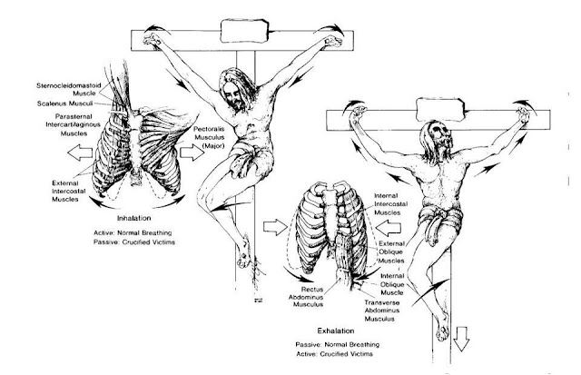The Anatomical And Physiological Details Of Death By Crucifixion