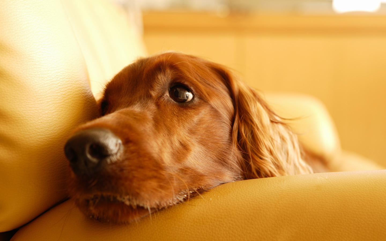http://1.bp.blogspot.com/-T_EM7CF61_U/UDzieQyGzZI/AAAAAAAAAPo/oIrlm8IB3L4/s1600/1269248819_1440x900_a-lonely-dog-wallpaper.jpg
