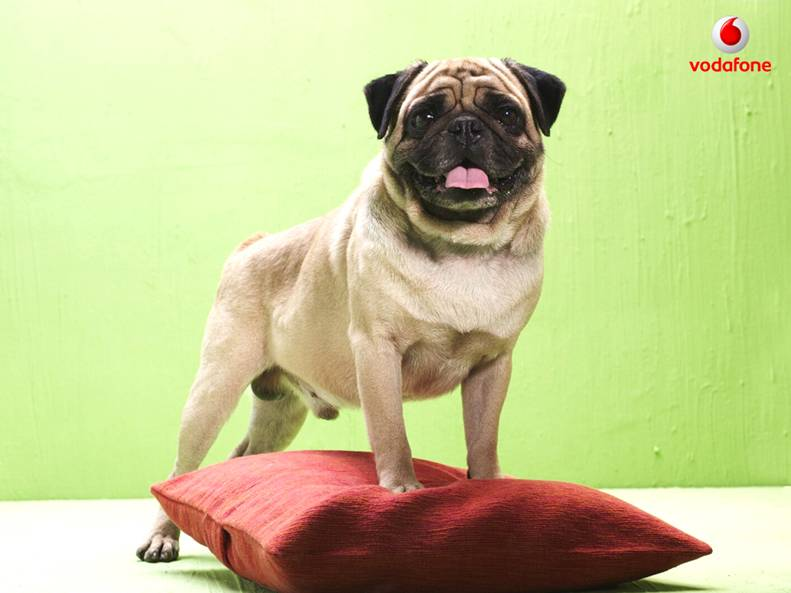Vodafone Dog (PUG) Photos - AtoZTotal News | Latest Job Notifications