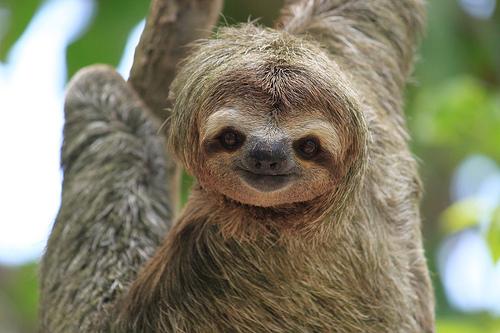 Sloth Facts For Kids | Anatomy, Diet, Habitat, Behavior