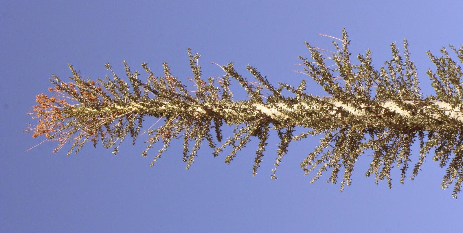 Jenis-Jenis Pohon Unik dan Terkenal di Dunia