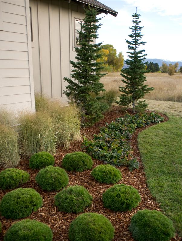 Landscaping With Evergreens Pictures : The phytophactor december