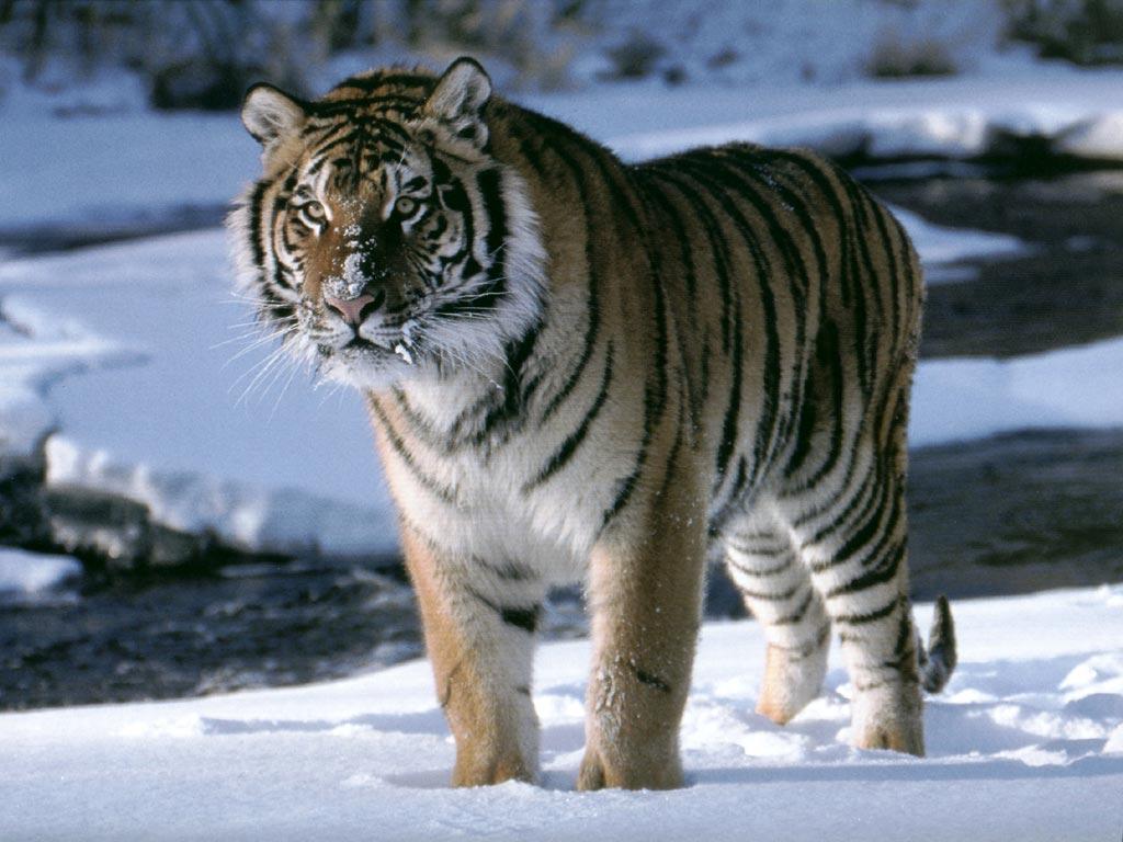 Animales peleando Taringa! - imagenes de animales salvajes peleando